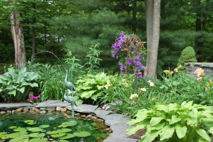 Waterfeature & Summer Blooming Perennials